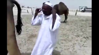 Hadith Followers (Muslims) Are Drinking Camel Urine