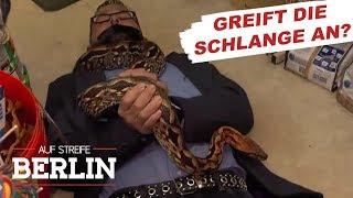 Chaos in der Zoohandlung: Reptil ausgebrochen? | Auf Streife - Berlin | SAT.1 TV