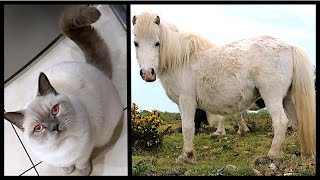 HUNDREDS OF PREGNANT HORSES! | CHRIS & EVE
