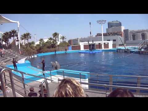 Dolphin Show - Valencia Oceanographic Museum
