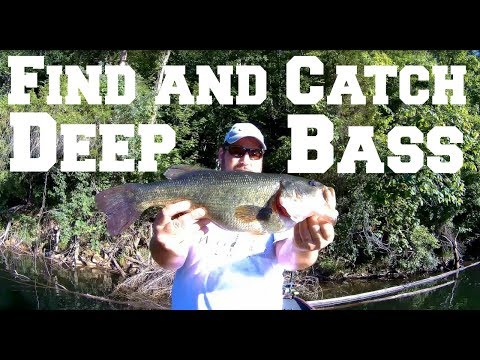 Find and Catch Deep Bass
