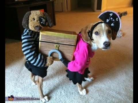 Youtube Cats And Dogs Wearing Halloween Costumes