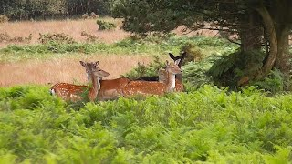 The Threatened Wildlife of Ashdown Forest