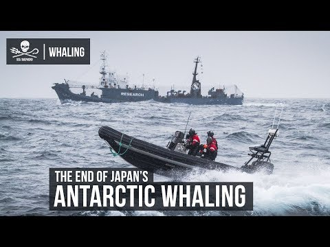 The End Of Japan's Antarctic Whaling