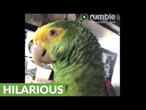 Persistent talking parrot repeatedly asks for ice cream