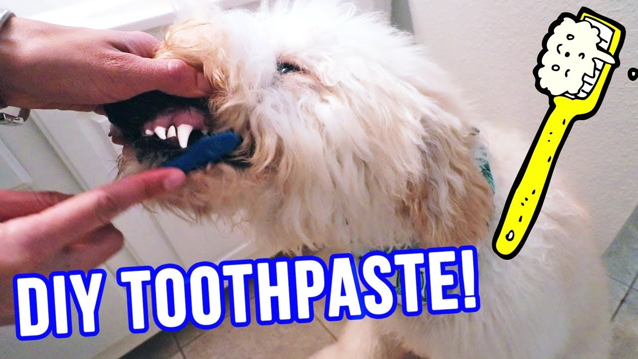 Homemade DOG Toothpaste ⭐ ONLY 2
