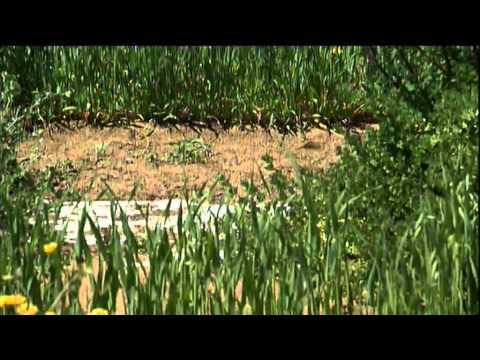 Anvil Media | Productive Solutions to Dryland Salinity