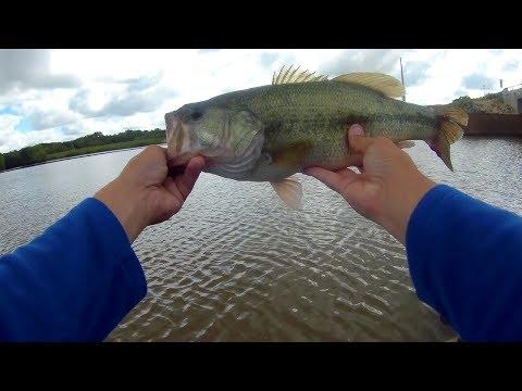 More Drop Shot Fishing - Lake Afton