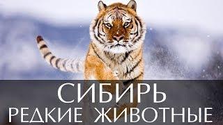 Редкие животные Сибири