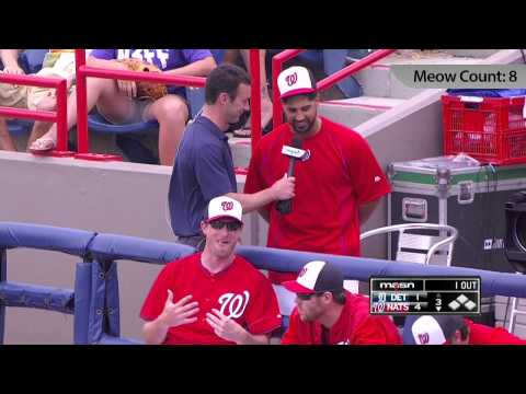 """Gio Gonzalez works word """"meow"""" into TV interview 11 times"""