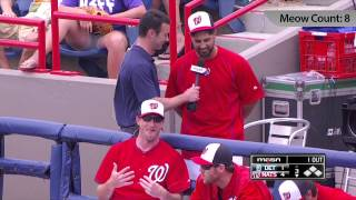"Gio Gonzalez works word ""meow"" into TV interview 11 times"