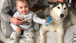 baby-parker-makes-sure-husky-gets-better-with-power-ranger-kisses-and-giggles