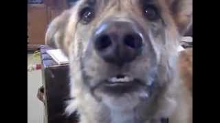 Самая популярная говорящая собака 2012 года