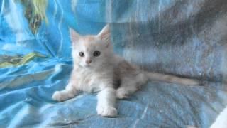 Cute kitten blink one eye.Милый котенок моргает одним глазом.