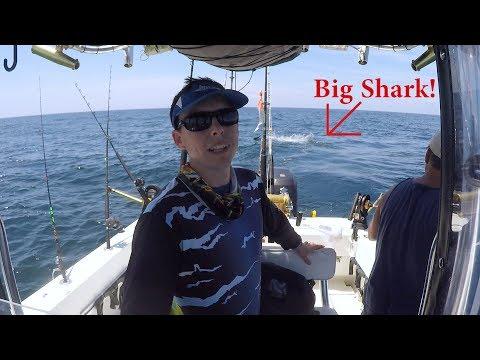 Big Shark Beat Us Twice While Kingfishing