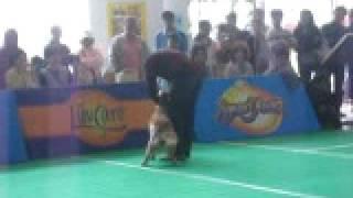 Golden Retrievers Best  Korat Army K9 Dog Trainers School