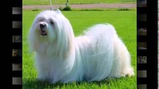 корм orijen для собак(, 2014-10-20T17:30:04.000Z)