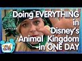 Can We Do It ALL in Disney's Animal Kingdom in ONE DAY?! ALL the Rides, ALL the Shows, ALL the Tips!
