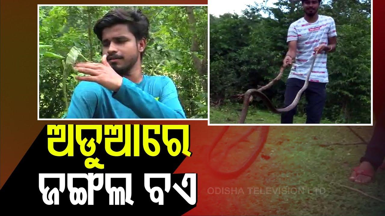 Action Sought Against 'Malkangiri's Mowgli' For Hunting Wildlife
