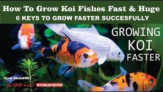 GROWING KOI BIG AND FAST, 5 KEY RULES , How to get little koi to grow into big koi