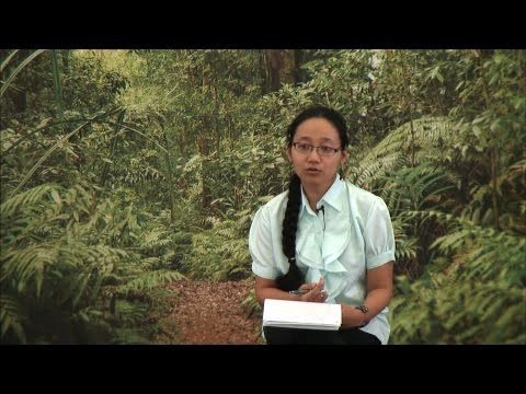 Fitri Aini - Smallholder rubber and oil palm plantations affect the greenhouse gases emissions?