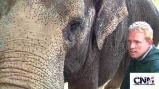 Elephant meet greet SUPER COOL in 1080P HD