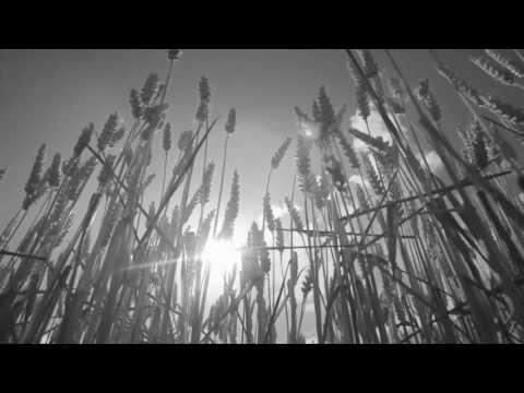 Sasse - Gino - Moodmusic