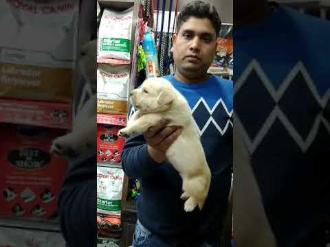Dog house in Patna Bihar on 7352994017 at Raj pets shop