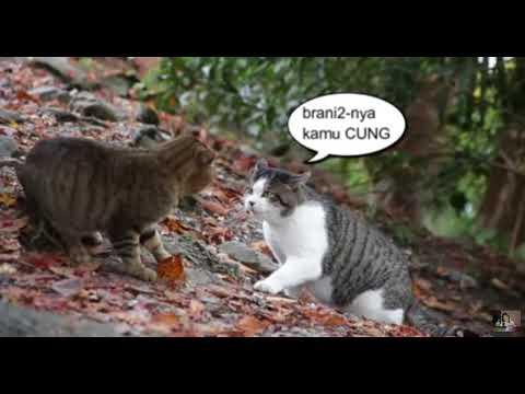Download 100+  Gambar Kucing Lucu Pakai Kata Kata Terbaru