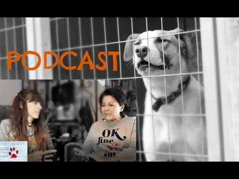 Why adopt a Greek stray dog | PODCAST