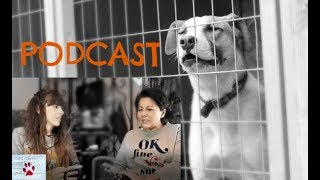 why-adopt-a-greek-stray-dog-podcast