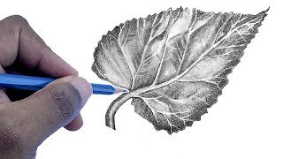 How To Draw A Leaf | Step by Step For Beginners