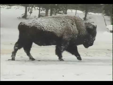 """Silence & Solitude:  Yellowstone's Winter Wilderness"" (2005)"