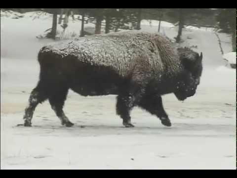 """Silence & Solitude:  Yellowstone's Winter Wilderness"" (2005)"