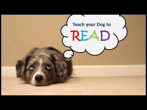 Teach Your Dog How to READ!