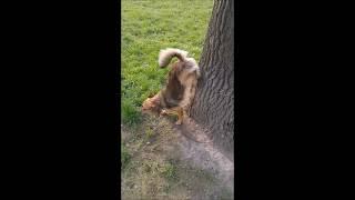 My Funny Dog PERLA  🔴  Mój Śmieszny Pies Perełka :):)
