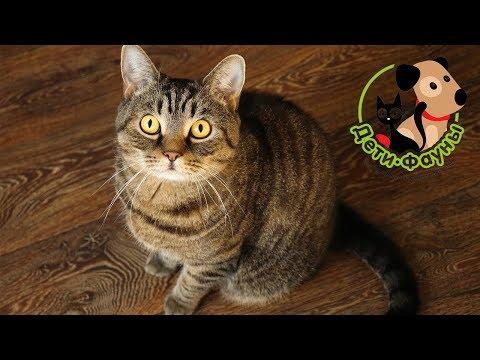 Полезных 5 советов для хозяев, чей кастрированный кот метит территорию