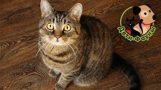 Почему кот метит после кастрации? 6 возможных причин