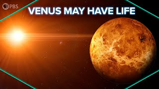 Venus May Have Life!