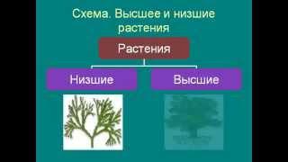 Цветковые растения.AVI