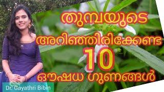 Amazing 10 Benefits | Uses Of Thumba Plant | തുമ്പയുടെ അറിഞ്ഞിരിക്കേണ്ട 10ഔഷധ ഗുണങ്ങൾ|  Malayalam