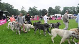 Donaueschingen 2014 Einmarsch Irish Wolfhound