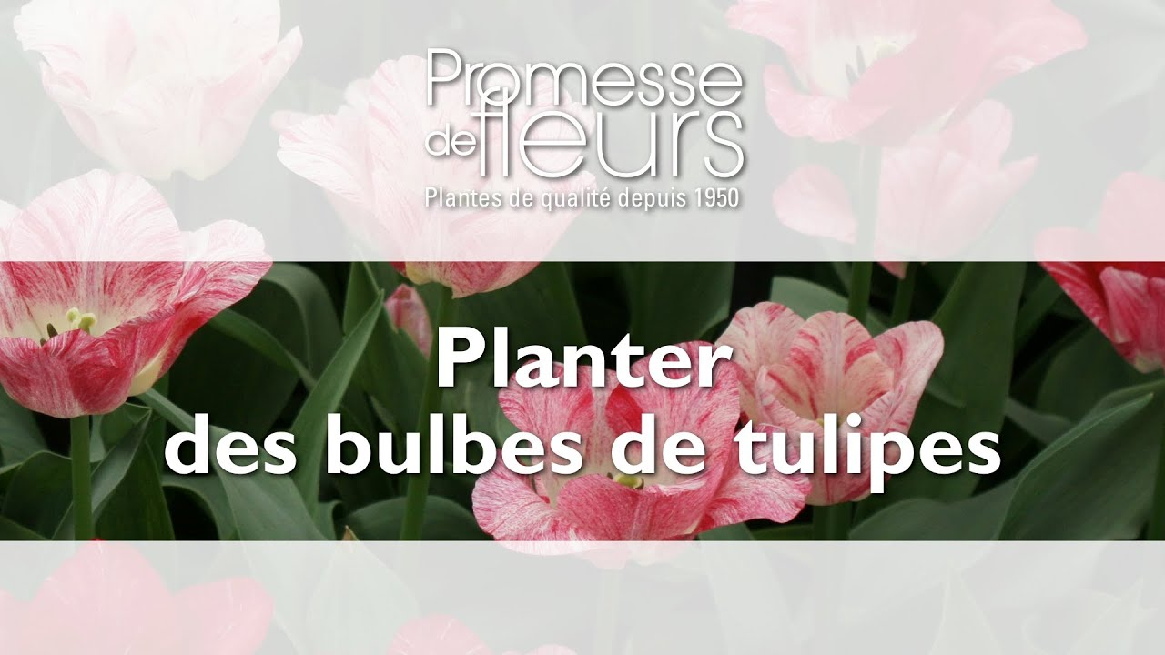 planter des bulbes de tulipes video jardinage pas pas youtube. Black Bedroom Furniture Sets. Home Design Ideas