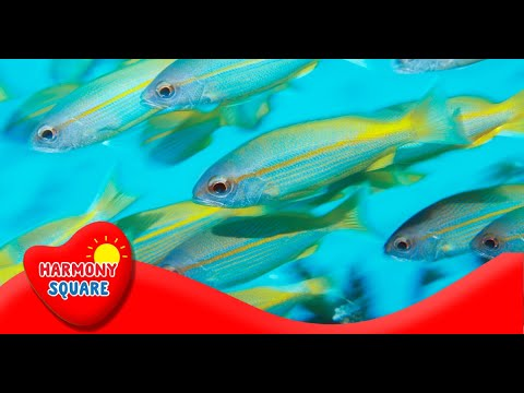 What Is Bioaccumulation - More Science On The Learning Videos Channel
