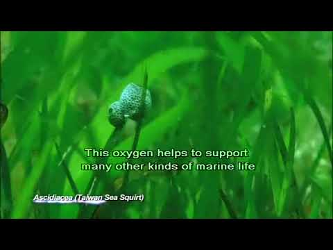 The growth cycle of seagrass
