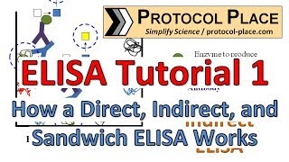 elisa tutorial 1 how a direct indirect and sandwich elisa works