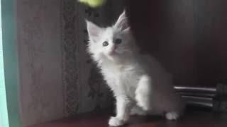 ЛИРИКУМ Ясен Пень - 2 месяца, Пнюша играет
