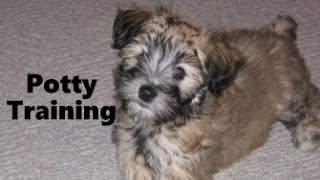 How To Potty Train A Whoodle Puppy - Whoodle House Training Tips - Housebreaking Whoodle Puppies