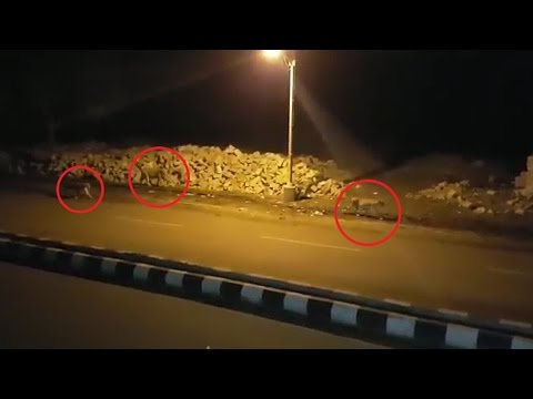 Gujarat Lions roam on Junagadh roads at night, watch video | वनइंडिया हिन्दी