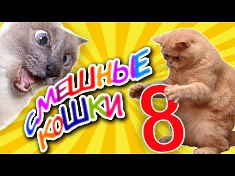 Смешное видео!!!СМОТРЕТЬ ВСЕ !!!🤣😅😹😂😇😍 - YouTube